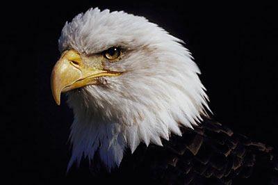 20170814_eagles